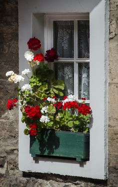 https://flic.kr/p/fzUvK7 | Colourful window box | A window box with red and white geranium flowers standing on a traditional window sill