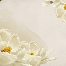 Wall mural - White Beauty