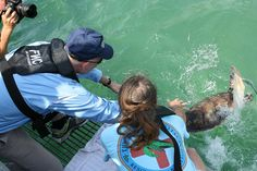 The Release by MyFWCmedia, via Flickr Florida Governor Rick Scott is on the dive platform with Turtle Hospital Director Richie Moretti.