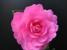 my fav flower <3