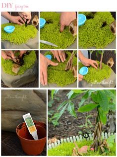 DIY Fairy Garden....Like the use of the tropical plant for the ''tree''......cool tree trunk.....add fairy furniture and voila fairy home sweet home. Hint I like to use fragrant creeping herbs as well as moss.