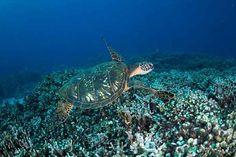 private charter out of Keauhou Bay, Big Island Visit Hawaii, Big Island, Road Trip, Road Trips