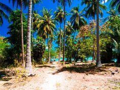 Bootstour von Koh Samui nach Koh Tan & Koh Madsum | Sonnig Unterwegs Reiseblog Lamai Beach, Plants, Palm Trees Beach, Small Restaurants, Thailand Travel, Small Island, Islands, Plant