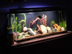 african cichlid tank - Google Search