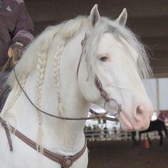 Gypsy Horse, Cobalt
