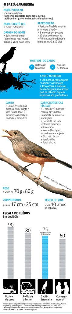 Cantoria de sabiá-laranjeira na madrugada divide ouvidos paulistanos