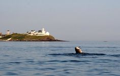 roches point - Google Search