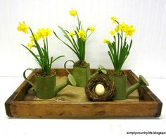 Daffodils in Watering Cans Centerpiece