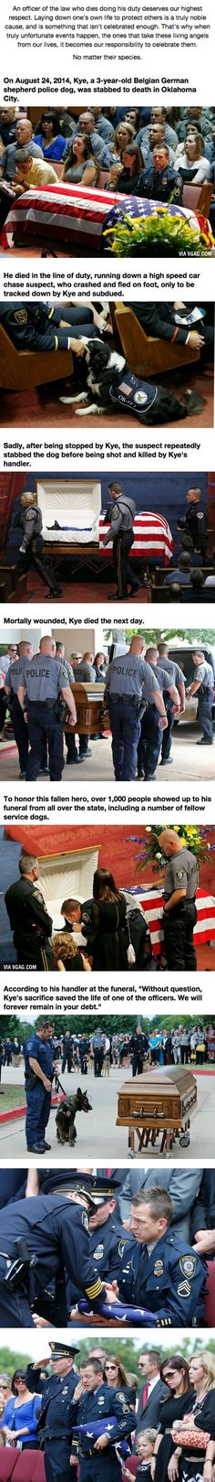 When This Hero Was Laid To Rest, He Was Truly Honored.<<< his handler was given a folded flag. They only give flags to the family of heroes. Think about that the next time you look at a dog. I Love Dogs, Puppy Love, Cute Dogs, Military Dogs, Police Dogs, Chien Golden Retriever, Animals And Pets, Cute Animals, Animals Planet