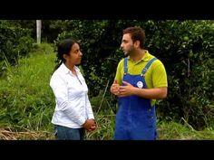 Escuela de campo:Sistemas de riego en cítricos - 31 de julio - YouTube