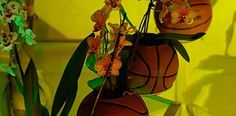 Basketball Recycling Planters Recycled Garden, Ways To Recycle, Repurposing, Recycling, Planters, Basketball, Gardens, Plant, Window Boxes