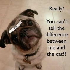 Really? You can't tell the difference between me and the cat??
