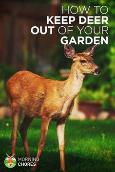 Garden Landscaping 21 Ways to Keep Deer Out of Your Garden and Plants Without Killing Them - Deer are beautiful, but they can be annoying pests for your garden. Learn the solution on how to keep deer out of your garden without killing them. Deer Garden, Slugs In Garden, Garden Insects, Garden Pests, Garden Fertilizers, Garden Tools, Deer Proof Plants, Deer Resistant Flowers, Deer Resistant Garden