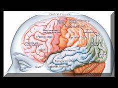 Nutrientes necesarios para aumentar tu inteligencia