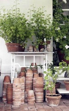 terracotta pots, Repinned by www.claudiadeyongdesigns.com and at www.thegardenspot.co.uk