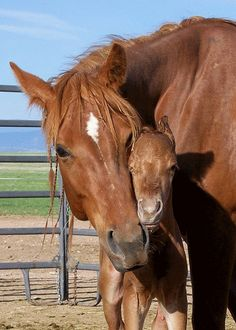 Kerry Cogburn of Wellington, Colorado, caputes the true love between American Quarter Horse mare, Electric Evangelena and her first foal. All The Pretty Horses, Beautiful Horses, Animals Beautiful, Cute Baby Animals, Farm Animals, Animals And Pets, Cute Horses, Horse Love, American Quarter Horse