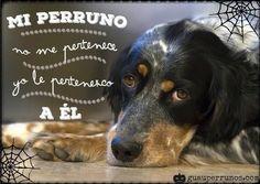 Mi perruno no me pertenece, yo le pertenezco a él. Amor #perruno #doglovers
