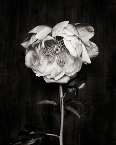 Botanical Black and White No. 5811 #luvocracy #design #photography #floral