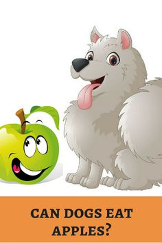Apple a day keeps doctor away. Will it keep our dog's veterinarian too? Dig it know!  http://dogbabe.com/can-dogs-eat-apples/