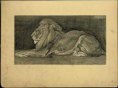 Lion - ID: 102303 - NYPL Digital Gallery