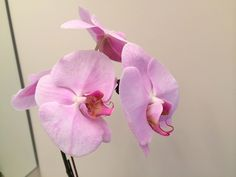 Orchids are absolutely gorgeous