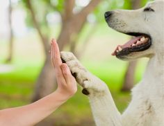 Puccini Foundation   Pets & People: Shared Cancers. Shared Hope.