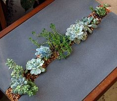 Succulent-infused art