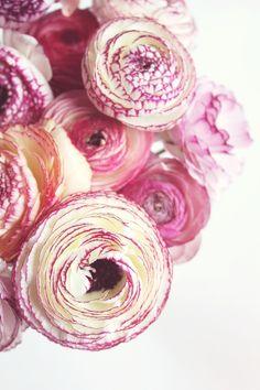 Zepetit http://zepetit.tumblr.com Flowers