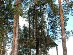 Or in an invisible tree house?