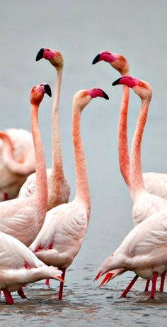 Flamingo Dance by fegari . on 500px