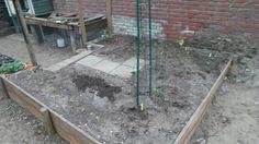 Start van de moestuin, eindelijk wat van mijn groentjes over geplant
