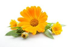 Organic Calendula Extract the ingredient that calms irritated skin.