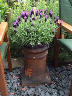 Chimney Pot Lavender