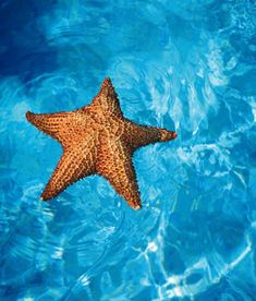 Sea Star -Sea stars are also known as starfish, but they are not fish at all.