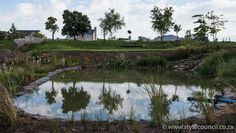 This is a wetland pond created by Style Council Exterior Designers in Cape Town. The water from this pond irrigates the Eco Village park and engineered river streams by Quentin Owen.
