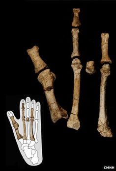Fossils Foot Bones Hint at Mystery Walker... ha, I'm kind of an archeology/anthropology nut. ;)