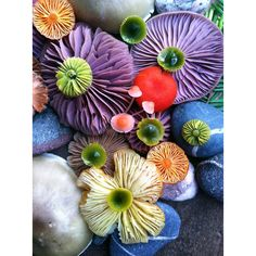 Mushroom Medley Photo #5 print by Jill Bliss