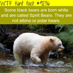 WTF Fun Facts is updated daily with interesting & funny random facts. We post about health, celebs/people, places, animals, history information and much more. New facts all day - every day! Wow Facts, Weird Facts, Random Facts, Strange Facts, Crazy Facts, Random Stuff, Fun Stuff, Fun Facts About Animals, Random Animal Facts