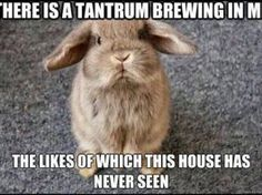 """33 Funny Easter Memes To Share With Your Family & Friends On Easter Sunday """"Angry bunny says 'Even if I poop jelly beans… what makes you think I'd give 'em to you! Rabbit Jokes, Funny Rabbit, Pet Rabbit, Cute Baby Bunnies, Funny Bunnies, Cute Funny Animals, Funny Animal Quotes, Animal Jokes, Funny Animal Pictures"""