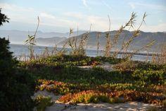 Shoreline Scenic