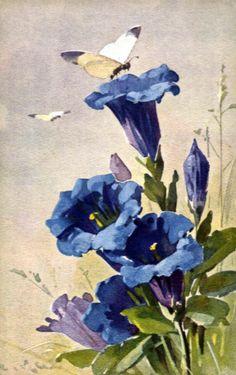 Blue Flowers and Butterflies ~ Catherine Klein Catherine Klein, Vintage Illustration, Botanical Illustration, Art Floral, Flower Images, Flower Art, Vintage Flowers, Blue Flowers, Vintage Prints