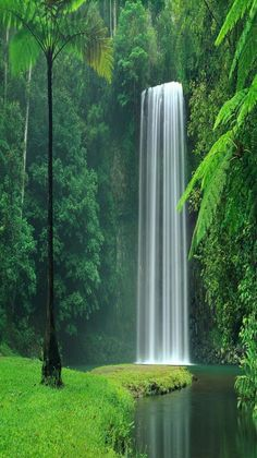 Waterfall at Lake Plitvice in the Forests of the Croatia National Park . Nature is so awesomely beautiful!