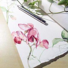 Мамочки, ну как можно не любить детский садик?), когда там так вкусно пахнет булочками с повидлом ☺️. И ребенок выбегает и рассказывает взахлеб о приезжающем театре #art#artist#watercolor#watercolour#waterblog#art_we_inspire#arts_help#aquarelle#botanical#botanicalart#botanicalillustration#flowers#illustration#watercolorpainting#акварель#иллюстрация