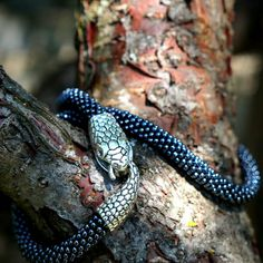 #snake #bead #beadcrochet #silver