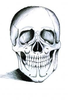 How to Draw a Realistic Skull, Step by Step, Realistic, Drawing Technique, FREE Online Drawing Tutorial, Added by Ferrrch, August 21, 2009, 5:54:03 am