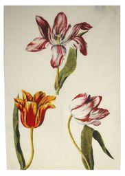 Tulips watercolour tea towel designed and made for Tate (100% cotton, 49 x 65 cm, £7.95) #towel #tulip #multicoloured