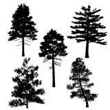 Bäume Der Ansammlung (Kiefer) Vektor - Wählen Sie aus über 55 Million qualitativ hochwertigen, lizenzfreien Stockfotos, Bilder und Vektoren. Melden Sie sich noch heute KOSTENLOS an. Bild: 8174823