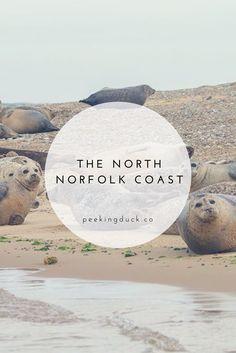 Things to do in Norfolk – beach walks, seal watching and camping! Norfolk Beach, Norfolk Coast, Norfolk Holiday, Stuff To Do, Things To Do, Beach Walk, Walks, Seal, Road Trip