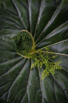 Photo Green Colors, Plant Leaves, Photos, Plants, Garden, Color, Pictures, Garten, Planters