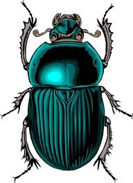 scarabs eat their dung cocoon and push out and on alone and therefore symbolize rebirth or reinvention.
